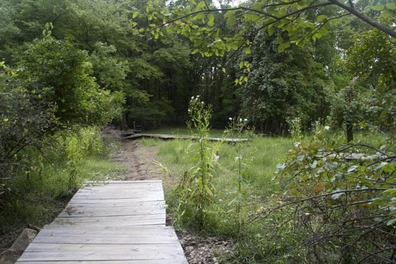 Boardwalk on the Green trail washed way over to the right