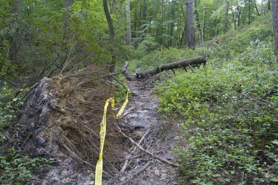 Green trail damage