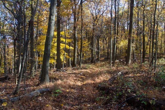 Cushetunk Trail