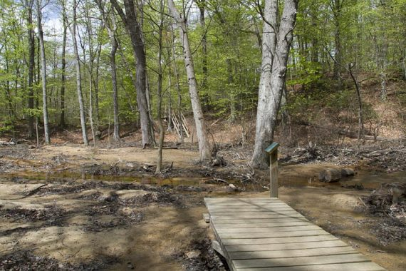 Wet trail area with boardwalk