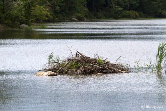 Close up of beaver dam