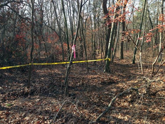 With some large blow-downs, new trail sections have been blazed around them.