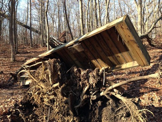 Uprooted section of boardwalk on the GREEN trail