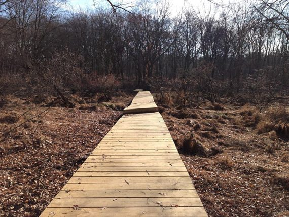New boardwalk that replaced a washed out section from Irene