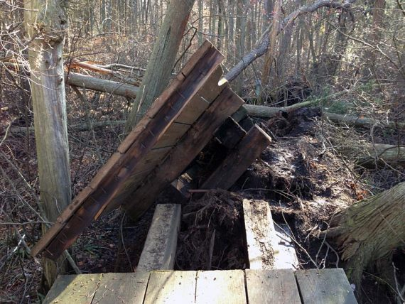 Closer look (we walked over to see the damage, the trail is re-routed away from this)