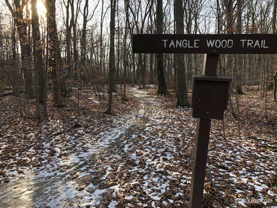 Highlands / Tanglewood