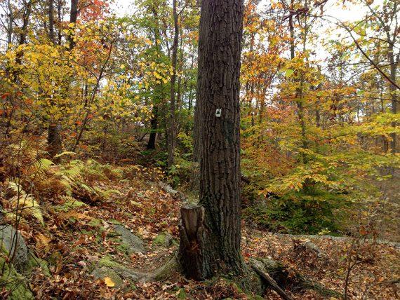 Old Guard Trail