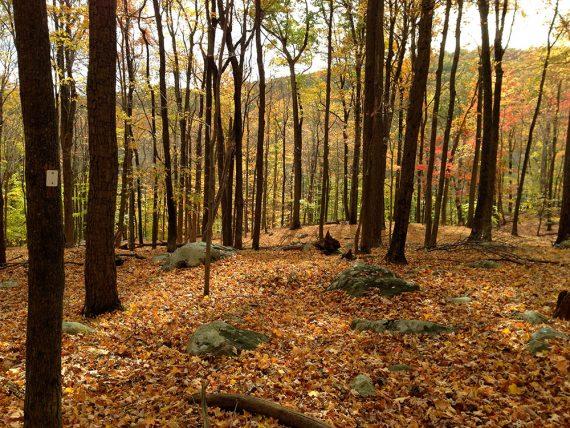 Millstone Trail