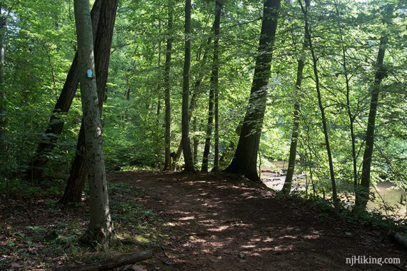 Blue trail near the brook