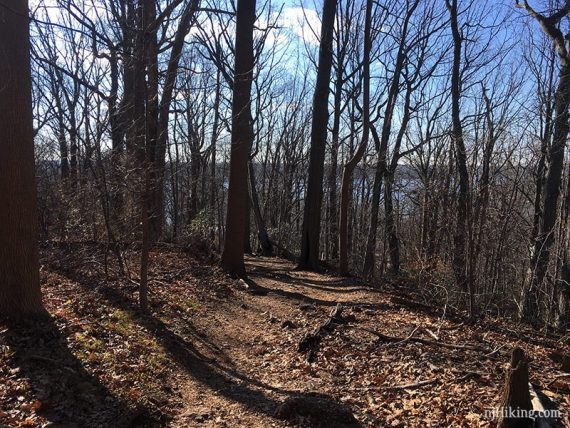 Approaching the limited overlook on Laurel Ridge