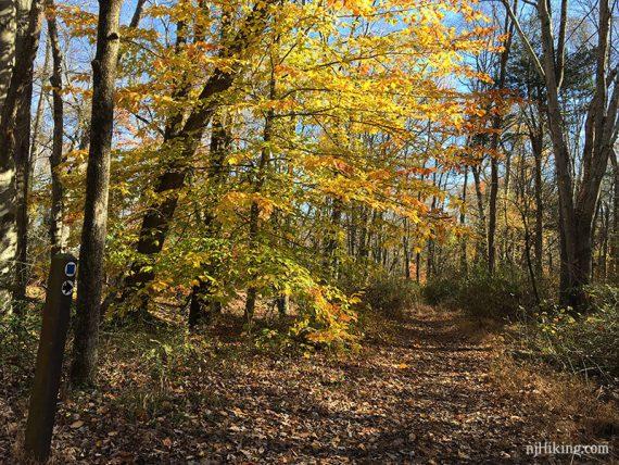 Manasquan trail marker