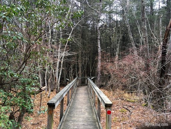 SILVER (absegami) trail through a cedar bog