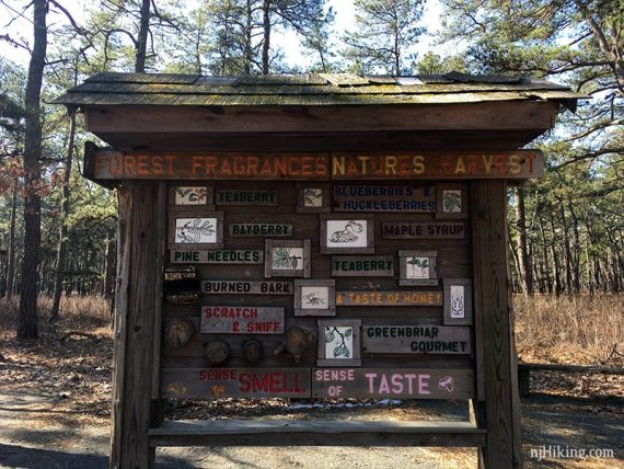 Display board about forest fragrances