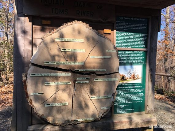 Tree cross section display board