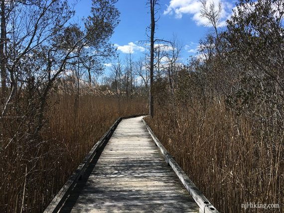 Wooden boardwalk with reeds on the sides