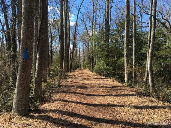 Smokeless Power Run trail
