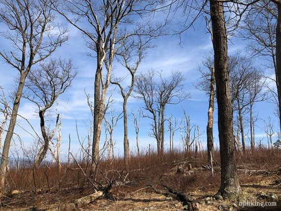 Dead trees along Douglas Trail