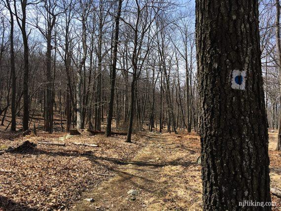 Blue dot on white trail marker