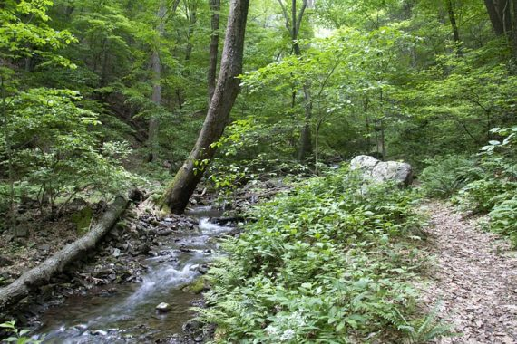 Unmarked spur trail next to a small creek
