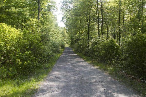 Path through Mohican Outdoor