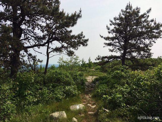 Trees on Blue Mountain