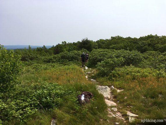 Appalachian Trail on Blue Mountain