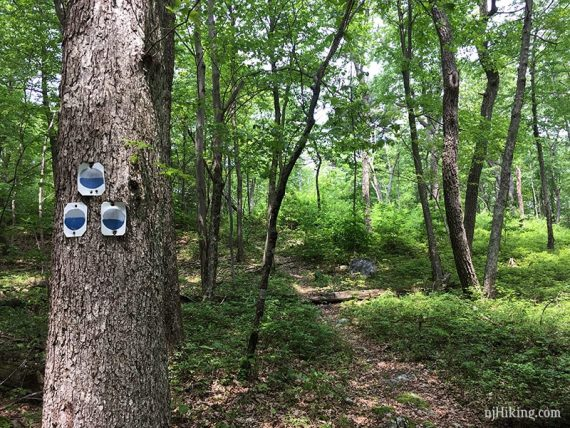 Blue/Gray Jacobs Ladder markers