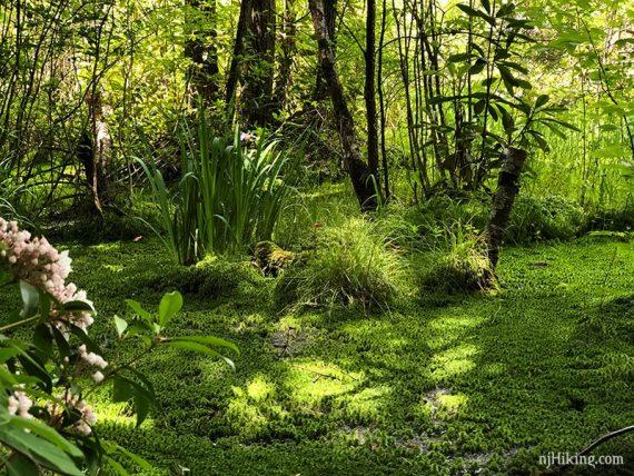 Rattlesnake Swamp