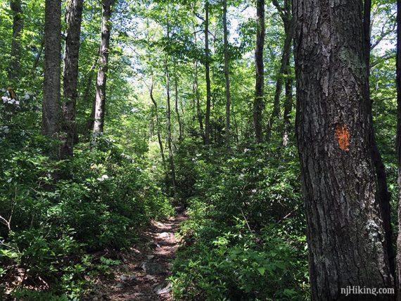 Orange trail marker on a tree