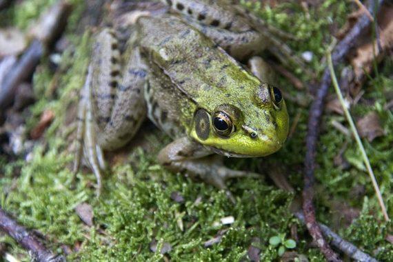 Froggy!