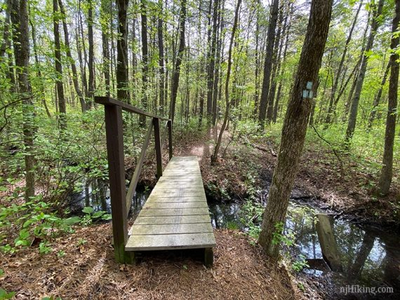 Bridge at start of BLUE trail