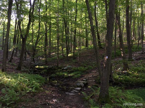 Harriman Seven Hills Trail
