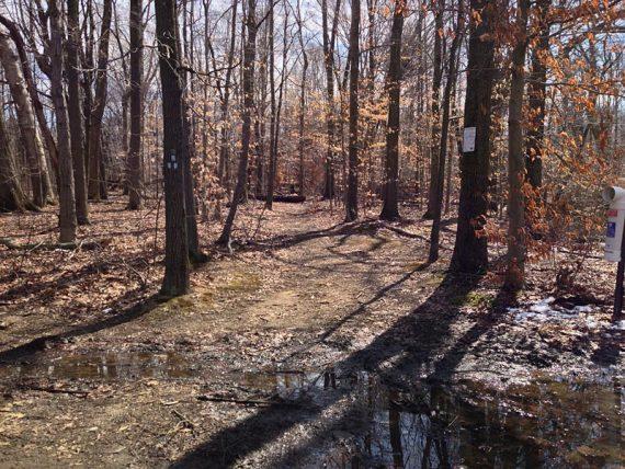Forest Brook trailhead (BLUE)