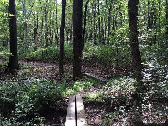 Plank boardwalk on a trail
