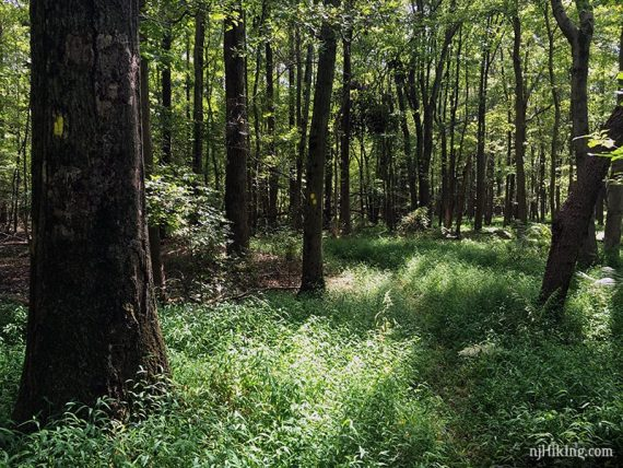 A few areas of the trail are overgrown