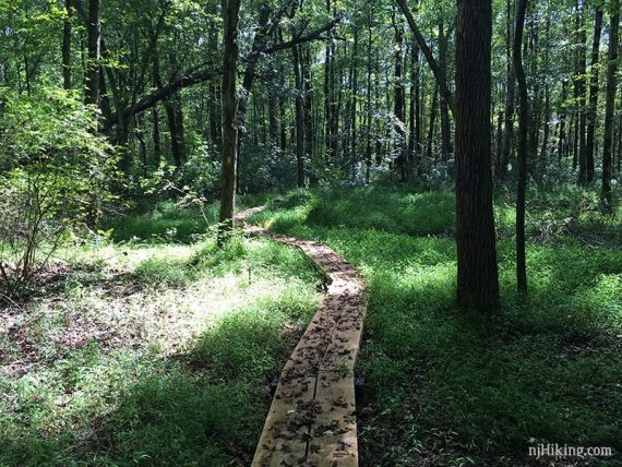 Boardwalk on the Ireland Brook trail