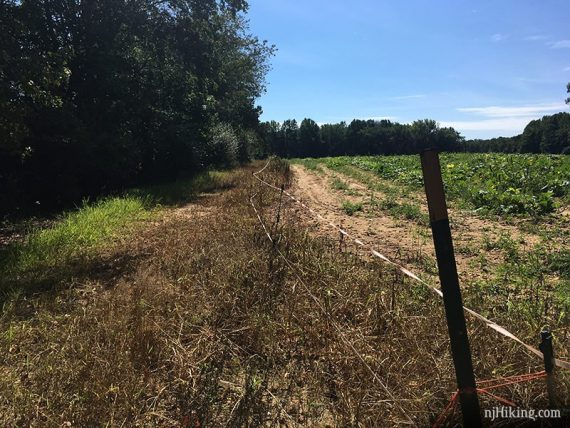 Trail running next to a fenced field
