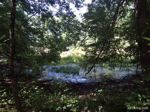 Small vernal pond