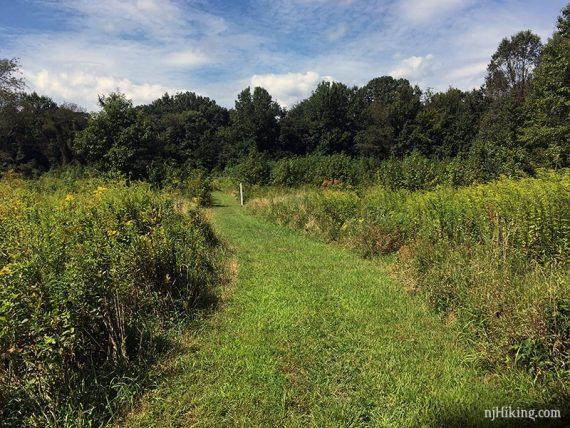 Mowed path through a field