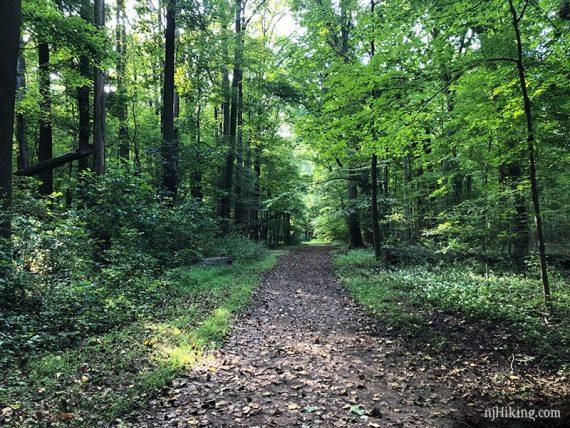Easy paths in Institute Woods