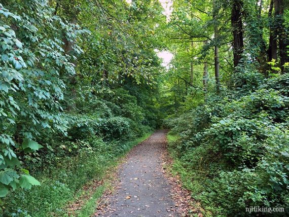 Path through Institute Woods