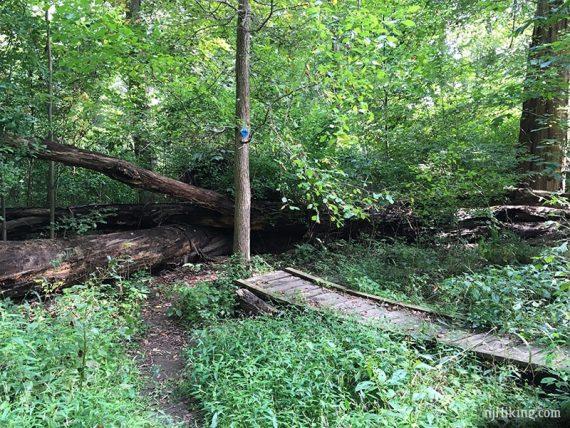 Marsh trail through Rogers Refuge