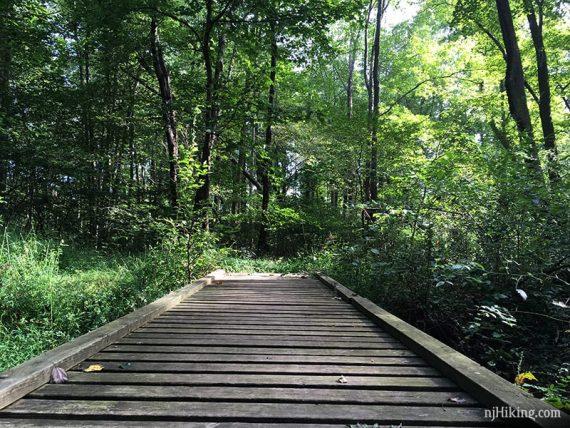 Boardwalk in Institute Woods