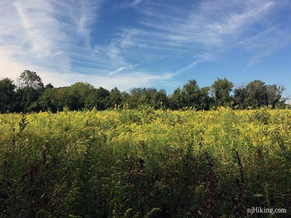 Field in Princeton Battlefield State Park