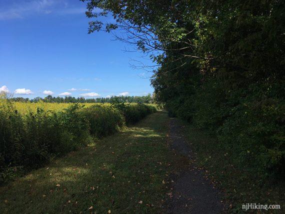 Walk along a field in Princeton Battlefield S.P.