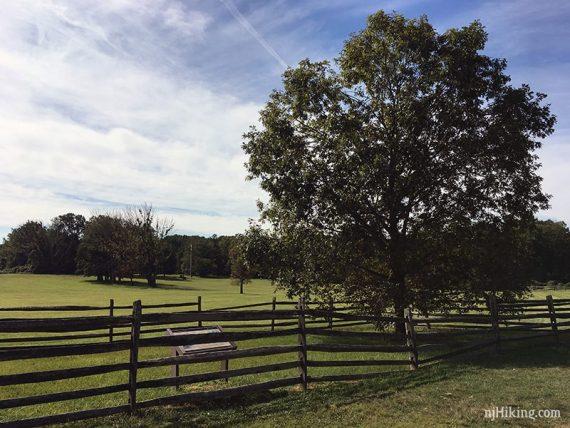 The site of the Mercer Oak