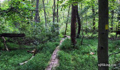 Ireland Brook Trail