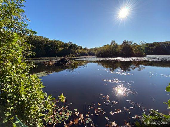 Beaver dam on Butler Reservoir