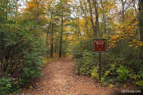 Fall at Belleplain State Park