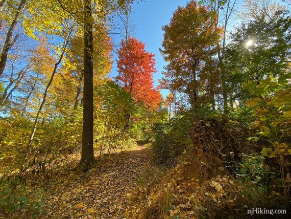 Fall foliage on the Patriot's Path